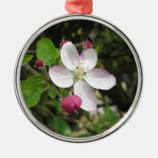 Roze appelbloem in de lente. Toscanië, Italië Zilverkleurig Rond Ornament