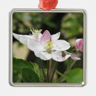 Roze appelbloem in de lente. Toscanië, Italië Zilverkleurig Vierkant Ornament