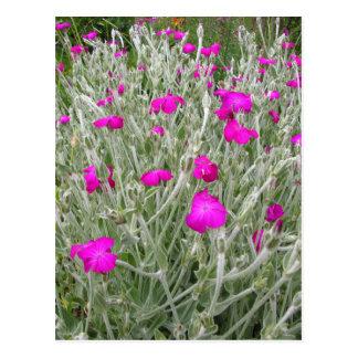 Roze bloem-Roze koekoeksbloem in een Engelse Tuin Briefkaart