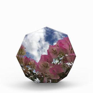 Roze bougainvillea prijs