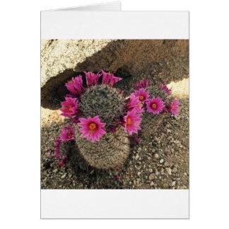 Roze Cactus in Bloei Kaart