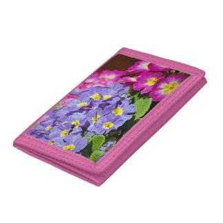 Roze en paarse sleutelbloemen