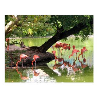Roze Flamingo's 7124 Briefkaart