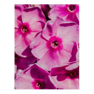 Roze floxbloemen wenskaarten