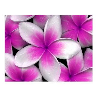 roze frangipani briefkaart