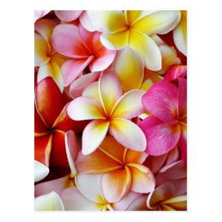 Roze Gele Witte Gemengde Bloem Plumeria Briefkaart