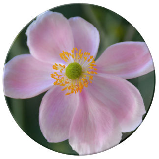 Roze Japanse anemoonbloem Porseleinen Bord