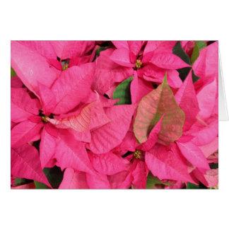 Roze Kerstmis van de Bloem van Poinsettia Wenskaart