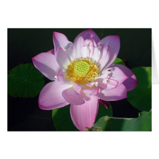 Roze Lotus Kaart