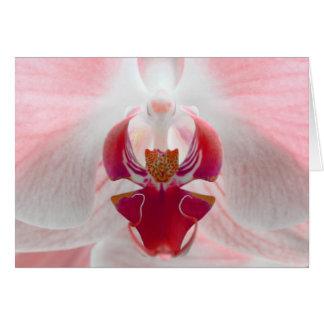 Roze Orchidee Kaart