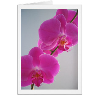 Roze Orchidee Wenskaart