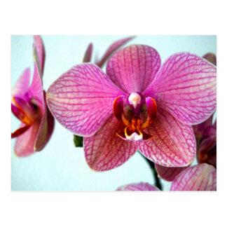Roze Orchideeën Briefkaart