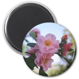 Roze Rozen Magneet