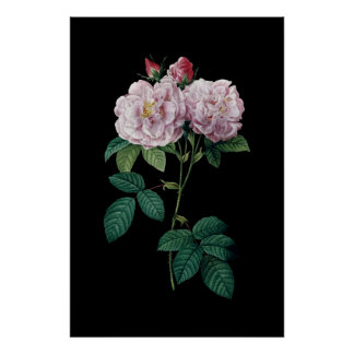 Roze rozen van zwart poster als achtergrond