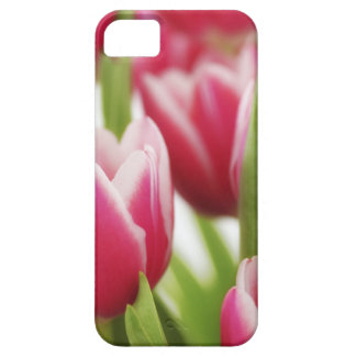 Roze tulpen barely there iPhone 5 hoesje