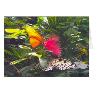 Roze van de Bloem van de vlinder het Gele Kaart