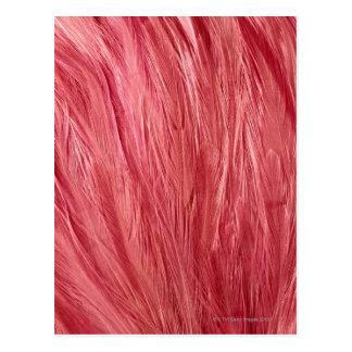 Roze Veren Briefkaart
