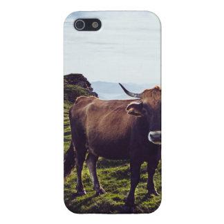Runder Koe op Mooi Landschap iPhone 5 Case