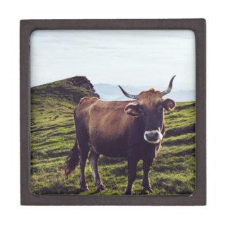 Runder Koe op Mooi Landschap Premium Bewaar Doosje