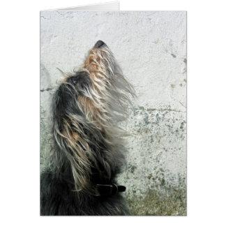 Ruwharige hond die omhoog eruit zien briefkaarten 0