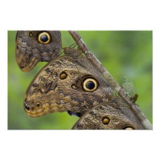 Sammamish, Washington. Tropische Vlinders 16 Foto Afdrukken