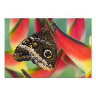 Sammamish, Washington. Tropische Vlinders 36 Foto Afdruk