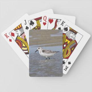 Sanderling Pokerkaarten