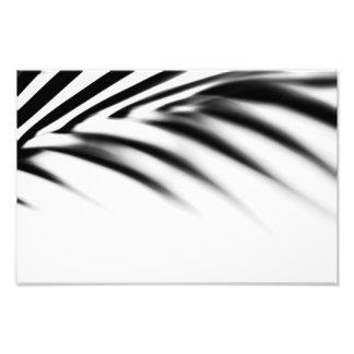 Schaduw Zen. Palmblad. Zwart-wit Foto