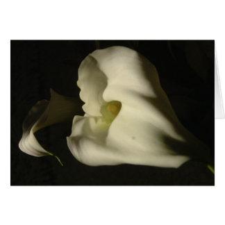 Schaduwrijke Callas Wenskaart