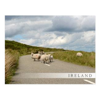 Schapen op de weg in de barbriefkaart van Ierland Briefkaart