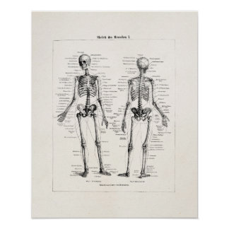 Schedel van het Bot van het Been van de Anatomie Poster