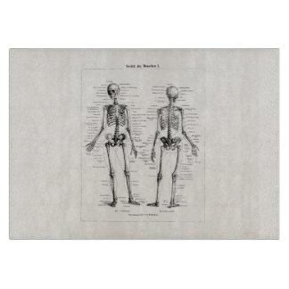 Schedel van het Bot van het Been van de Anatomie Snijplank