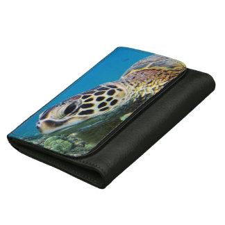 Schildpad van het Zee van Hawaï de Groene