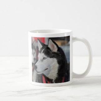 Schor hond vóór een ras, Canada Koffiemok