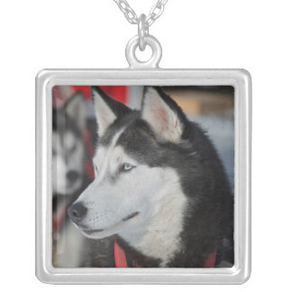 Schor hond vóór een ras, Canada Zilver Vergulden Ketting