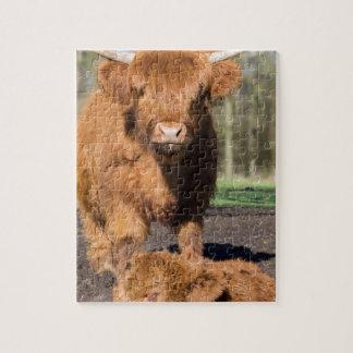 Schotse de Hooglanderkoe van de moeder dichtbij Puzzel