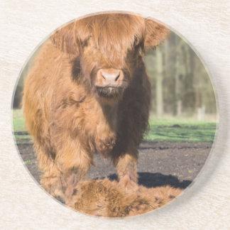 Schotse de Hooglanderkoe van de moeder dichtbij Zandsteen Onderzetter