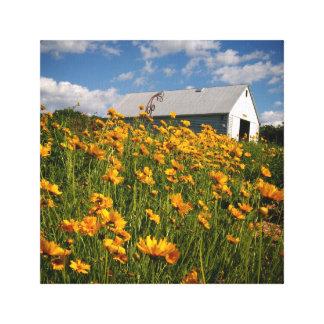 Schuur en wildflowers canvas afdruk