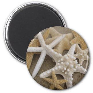 seastars (zeester) magneet