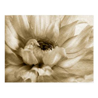 Sepia Wit & Aangepaste de Achtergrond van de Briefkaart