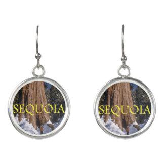 Sequoia ABH