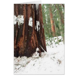Sequoia in de sneeuw kaart