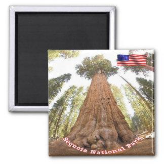 Sequoia van het Park van de V.S. de V.S. de Vierkante Magneet