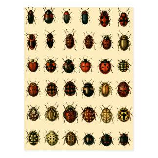 Serie van Onzelieveheersbeestjes Briefkaart