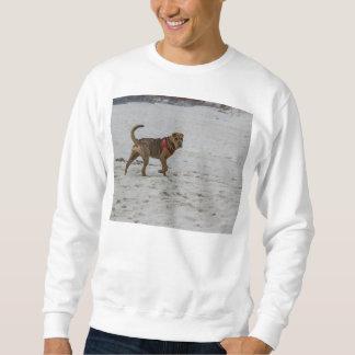 shar pei op strand trui