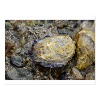 Shell van de oester briefkaart