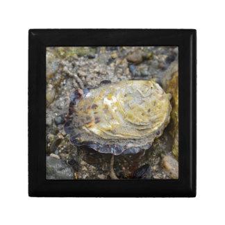 Shell van de oester decoratiedoosje