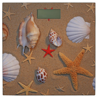 Shells en de Zeester van het zee op Zand wordt Personenweegschaal