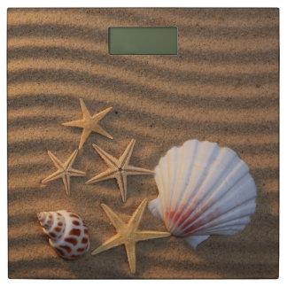 Shells en de Zeester van het zee Personenweegschaal