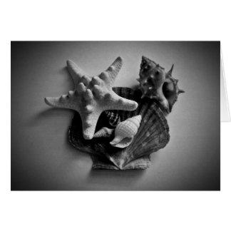 Shells in zwart-witte lege kaart voor uw tekst